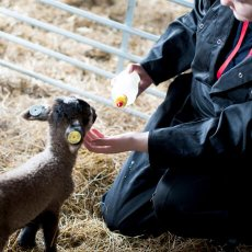 Careers in Animal Care